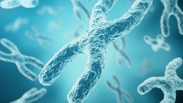 Cromossomo X