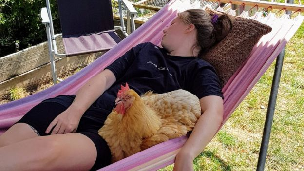 A young woman asleep in a hammock with her pet chicken