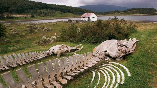 動物的骨架
