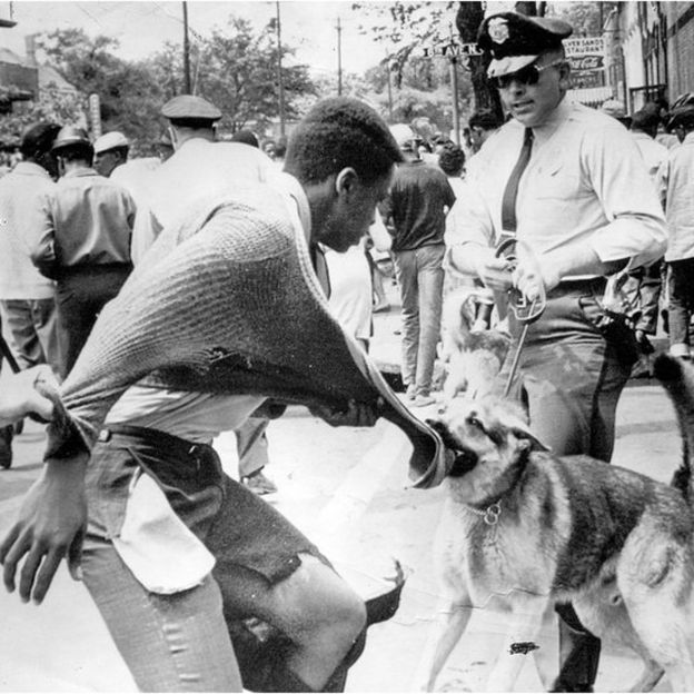 African-American protesters being attacked by police dog in a street during demonstrations against segregation, Birmingham, Alabama, May 4, 1963
