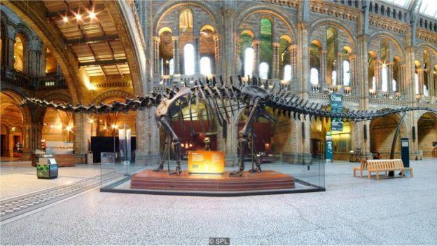 Chúng ta lẽ ra không cần phải vào bảo tàng mới xem được các bộ xương hay mô hình khủng long, nếu như tiểu hành tinh không va vào Trái Đất hồi 66 triệu năm trước