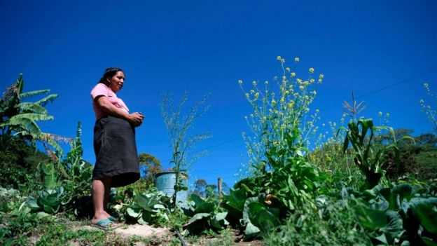 Una mujer en el campo de Guatemala