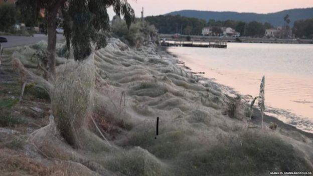 Plantas e árvores cobertas por teia de aranha