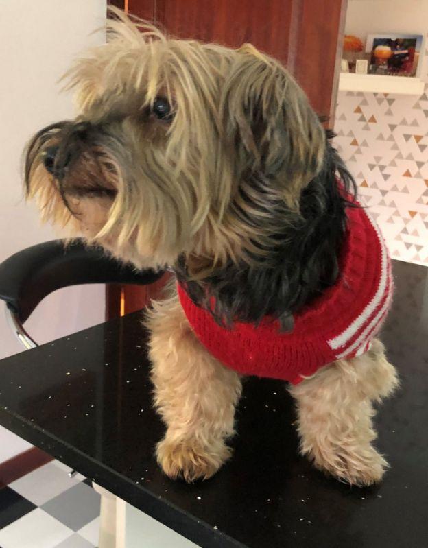 Toby needle dog