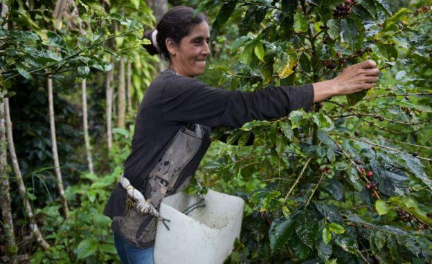 Productora de café