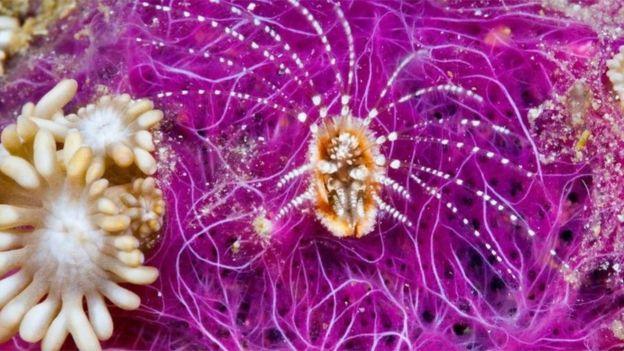 تمثل الجراثيم 90 في المئة من جميع الكائنات الحية التي تعيش في المحيطات