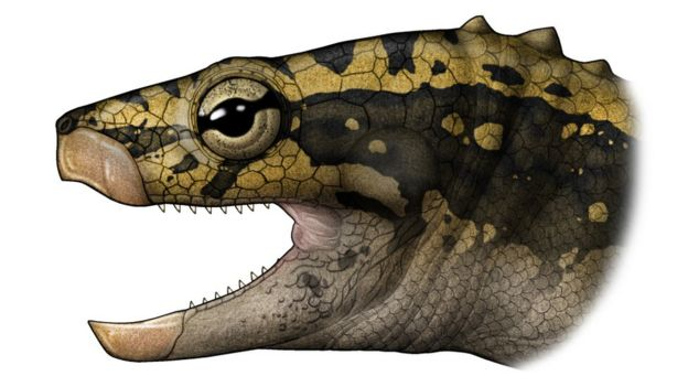 ancient fossil turtle had no shell bbc news