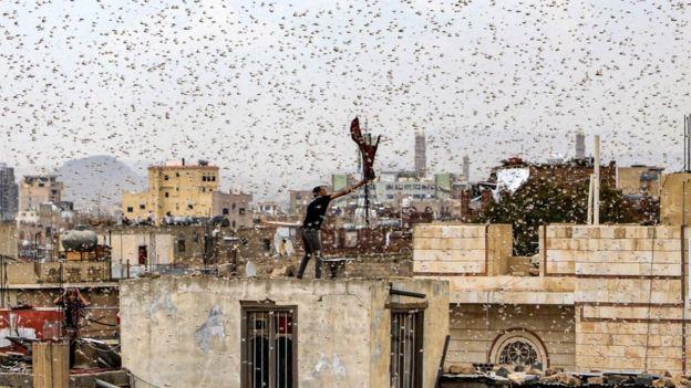 Um homem tenta capturar gafanhotos em pé no telhado enquanto eles enxameiam a capital iemenita Sanaa