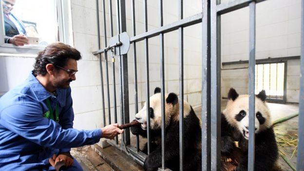 印度国宝级影星阿米尔·汗来到四川成都,开启了他体验中国四川行成都站的系列活动。图为阿米尔·汗给大熊猫喂食。