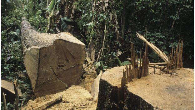 Área desmatada na floresta
