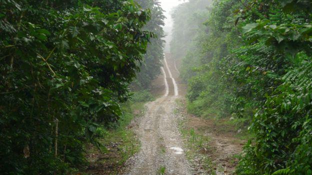 Camino en la Amazonía