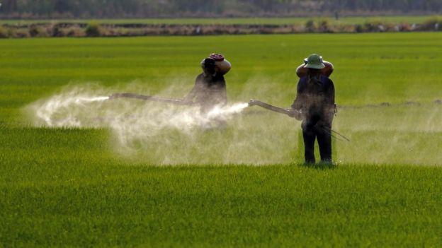 Fazenda recebendo tratamento com agrotóxicos