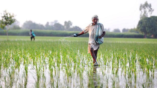 Dois agricultores trabalham em plantação na Índia