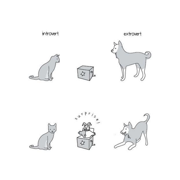 Un gato y un perro reaccionando ante una sorpresa.