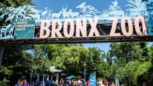 Zoológico del Bronx