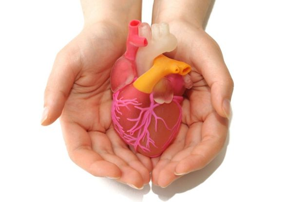 Corazón sintético entre manos.