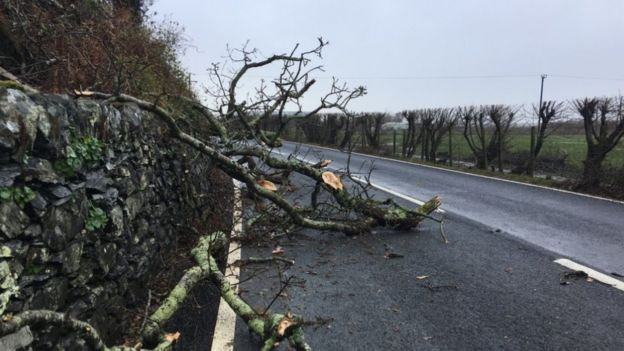Large tree branches on the A493 Fairbourne