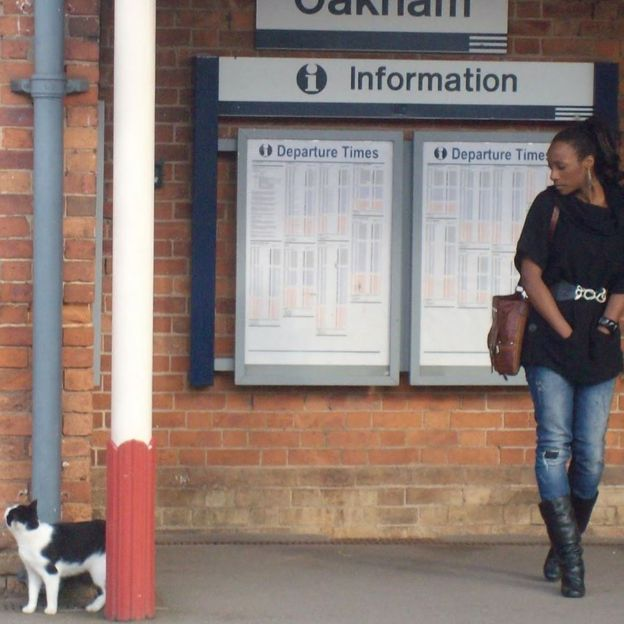 The commuter cats who became fur-mous _109792325_cat