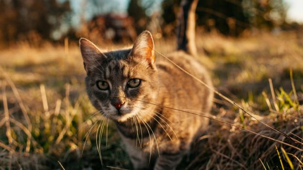 Stock image of a brown cat outfoors