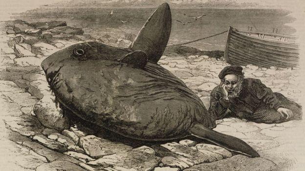 1872年在倫敦出版的雜誌插畫,描繪一位漁民在直布羅陀海峽捕獲太陽魚的情形