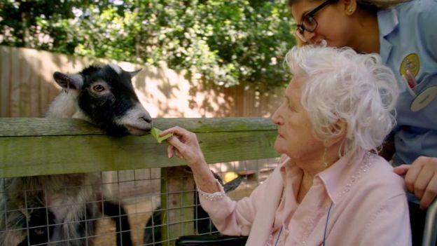 Residente alimenta uma cabra