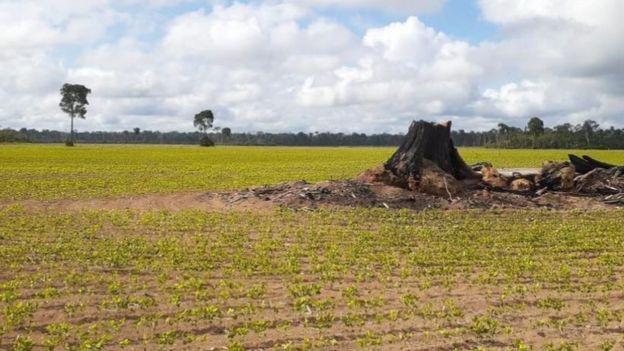 Tentativa de implantação de polo industrial em Belterra favoreceu a expansão da soja