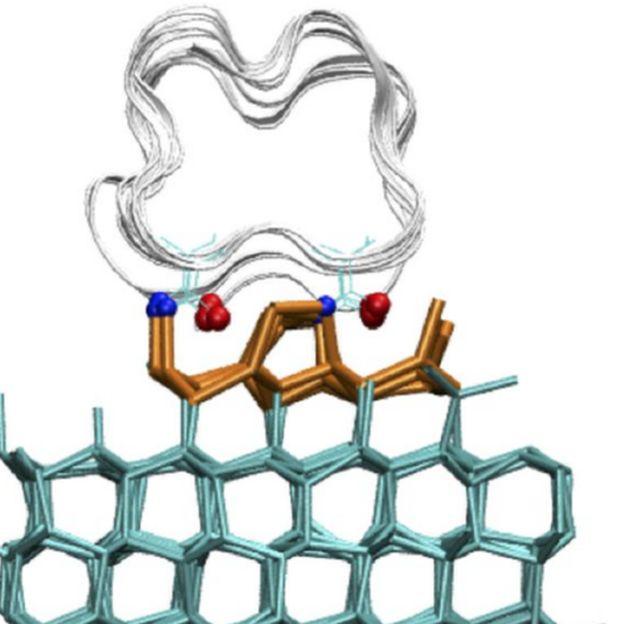 Ilustración que muestra la proteína anclándose a la superficie del hielo