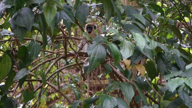 Un mono en su hábitat silvestre.