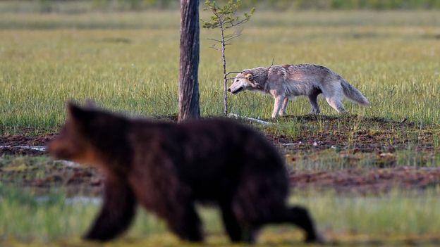 Un zorro y un oso