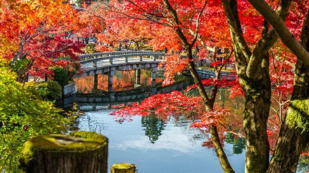 Bir nehir kenarındaki kırmızı yapraklı ağaçlar.