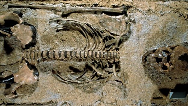 Homo erectus-da doğuşun daha rahat ola biləcəyi düşünülür