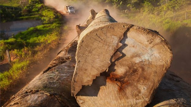 caminhão com toras de madeira na Amazônia