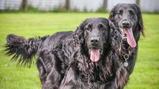 Jillian's dogs
