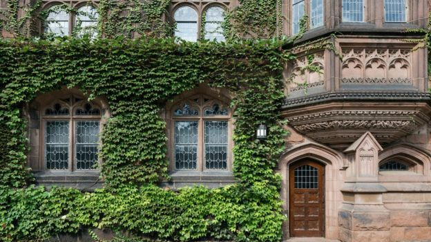 La hiedra en uno de los edificios de la Universidad de Princeton