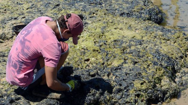 Voluntário com luva e máscara trabalha sobre manchas de óleo em pedras