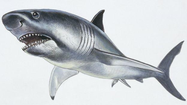 Cómo Era El Megalodón El Gigantesco Tiburón Prehistórico