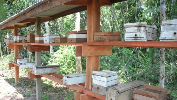 Colmeias em produção em comunidade da Reserva Tapajós Arapiuns