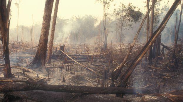 Árboles quemados en la selva amazónica