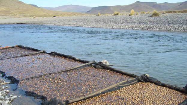 Tunta lavándose en agua en Ilave, Puno, Perú, 2008