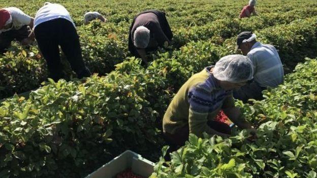 mevsimlik tarım işçileri