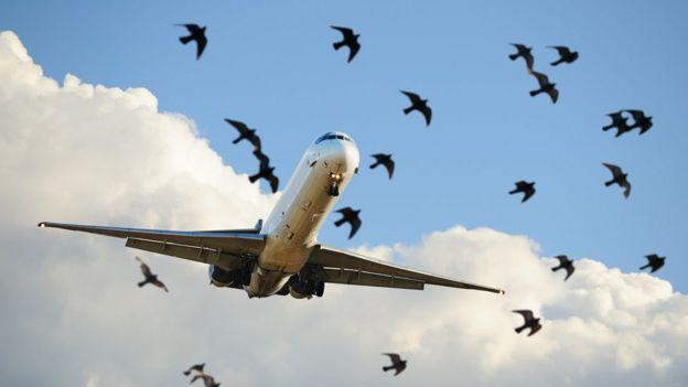 Aves volando cerca a un avión