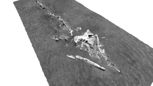 3D reconstruction of whale skeleton at Darwin Mounds