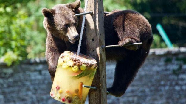 Brumma the bear