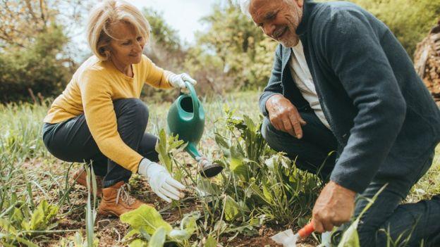 Adults gardening