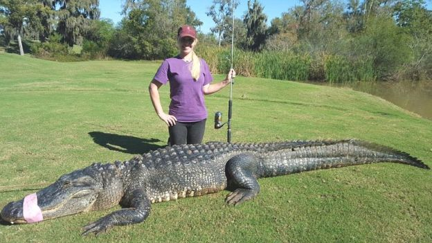 the dental nurse who became an alligator catcher bbc news