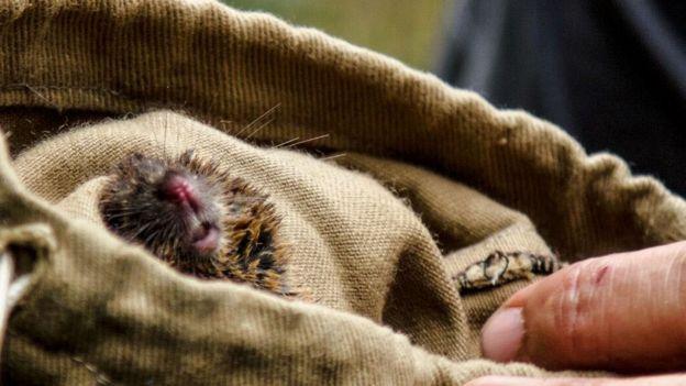 Focinho de roedor em saco de pano
