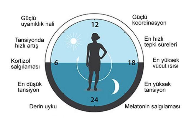 Vücut saati