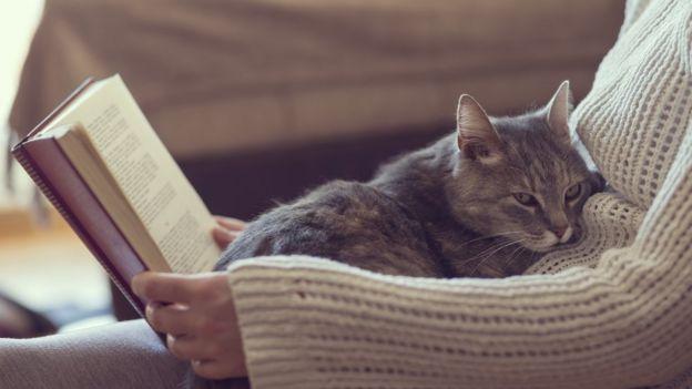 Gato no colo de dono