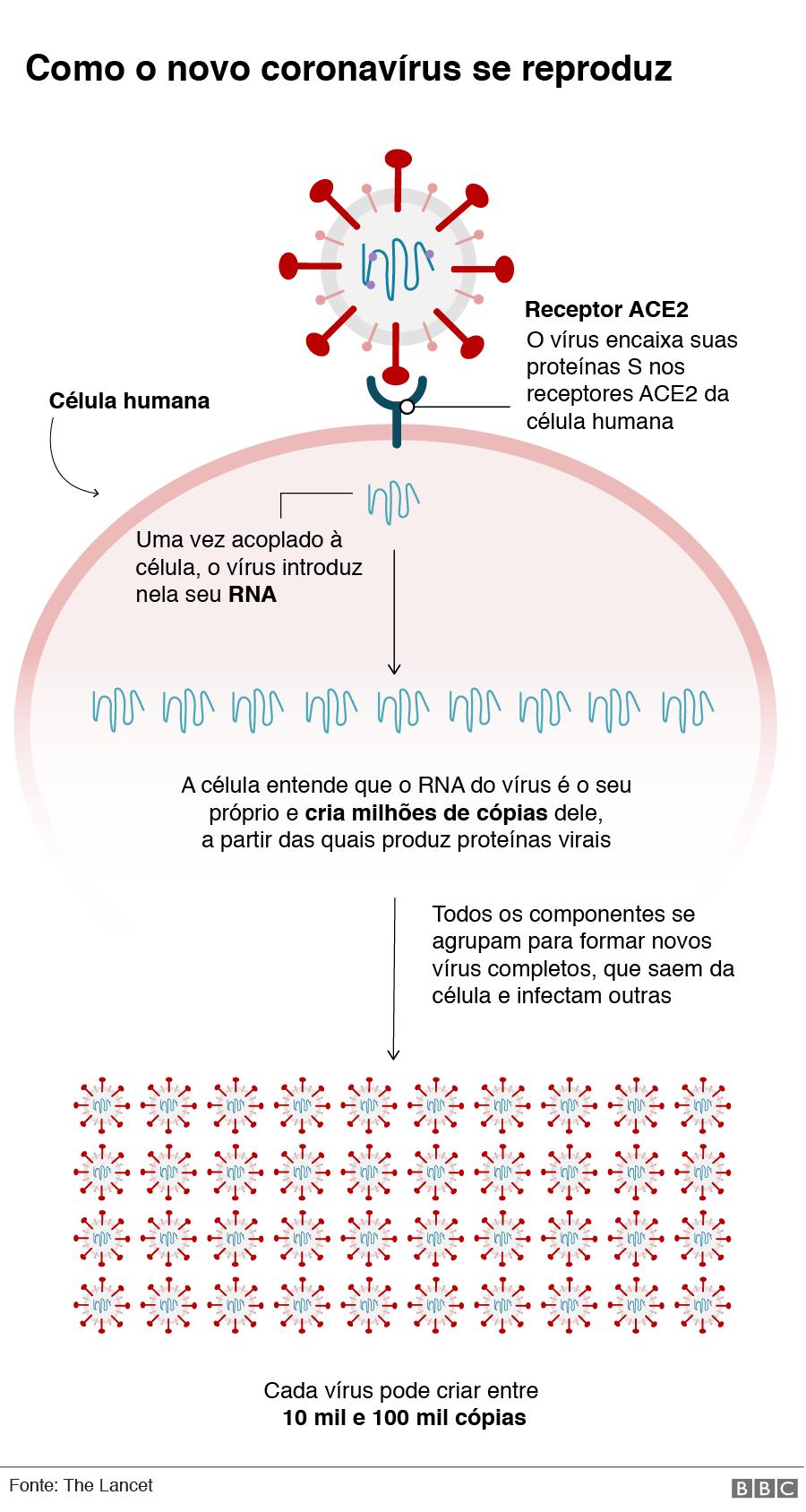 Gráfico mostra o que coronavírus faz no seu corpo