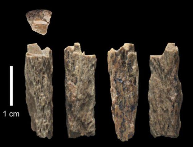 ฟอสซิลเศษกระดูกของมนุษย์โบราณ ซึ่งพบที่ถ้ำเดนิโซวาในรัสเซียเมื่อปี 2012